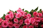 Bouquet of pink roses — Stock Photo