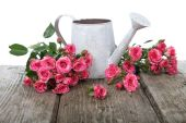 Bouquet of roses in a watering can — Stock Photo