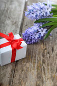 Blue hyacinth and greeting card  — Stockfoto