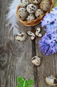 Easter composition with quail eggs and hyacinth — Stock Photo