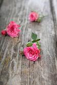 Buquê de rosas — Fotografia Stock