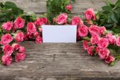 Pink roses and greeting card  — Stockfoto