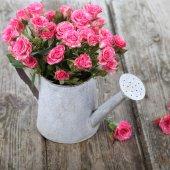 Bouquet de roses dans un arrosoir — Photo