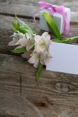 White alstroemeria and gifts — Stock Photo