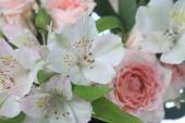 Bouquet of pink and white flowers  — Stock Photo