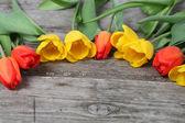 Orange and yellow tulips — Stock Photo