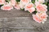 Pink roses — Stok fotoğraf
