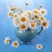 Beautiful chamomiles in a blue jug — Stock Photo