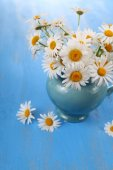 Beautiful chamomiles in a blue jug — Stock Photo