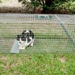 Humane Animal Trap — Stock Photo #52487759