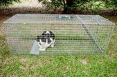 Humane Animal Trap — Stock Photo