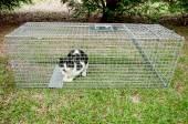 Humane Animal Trap — Stock Photo