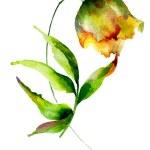 Yellow Tulips flower — Stock Photo #56751751