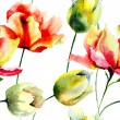 Watercolor illustration of Tulips flowers — Stock Photo #58953341