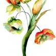Watercolor illustration of wild flowers — Stock Photo #68687457