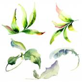 Set of watercolor leaves — Stock Photo