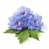 Blue delphinium — Stock Photo