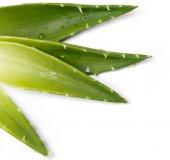 Medicine. Aloevera — Stock Photo