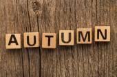Word autumn on toy bricks — Stock Photo