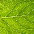 Mint leaf in details — Stock Photo #58499649