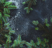 Fir with snow on the table — Stockfoto