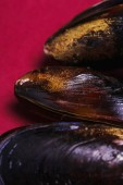 Delicious mussel on a pink — Stock Photo