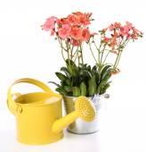 Equipment. Tools for gardening — Fotografia Stock