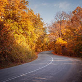 Road in a autumn forest — Stock Photo