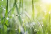 草覆盖着露水 — 图库照片
