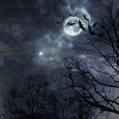 Bats flying in the night — Stock Photo