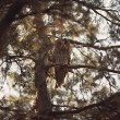 Owl sitting on the branch — Stock Photo #65583833