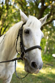 White Horse in garden — Foto Stock