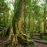 Jungle landscape. Wooden bridge at misty tropical rain forest — Stock Photo #52787341