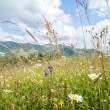 Amazing sunny day in mountains. Summer meadow with wildflowers — Stock Photo #52787417