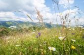 Amazing sunny day in mountains. Summer meadow with wildflowers — Stock Photo