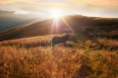 Západ slunce v pozadí přírody pohoří. silueta koně na opar — Stock fotografie