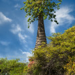 Asian religious architecture. Ancient ruins with growing trees u — Stock Photo #53813851