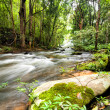Tropical rainforest landscape with flowing river — Stock Photo #53814515