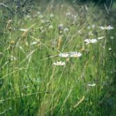 Étonnant lever de soleil au pré l'été avec des fleurs sauvages — Photo