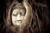 Buddha huvud gömd i trädens rötter. gammal sandsten skulptören — Stockfoto