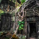Ta Prohm temple with giant banyan tree at Angkor Wat, Cambodia — Stock Photo