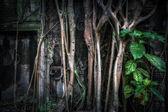 Giant banyan tree roots at Ta Prohm temple. Angkor Wat, Cambodia — Stock Photo