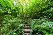 Trekking trail leading through jungle landscape — Stock Photo