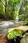 Tropical rainforest landscape with flowing river — Stock Photo