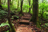 Trekking trail leading through jungle landscape of tropical forest — Stock Photo