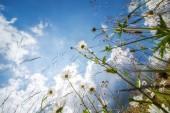 úžasné slunečný den na letní louka s květy pod modrá s — Stock fotografie