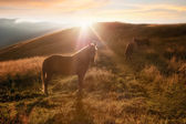 Sunset in mountains nature background. Horses silhouette at haze — Stock Photo