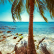 Sunny day at tropical beach with palm tree — Stock Photo #54501571