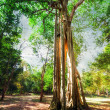 Sunny rainforest with giant banyan tree — Stock Photo #54502095