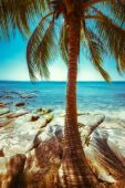 Sunny day at tropical beach with palm tree — Stock Photo